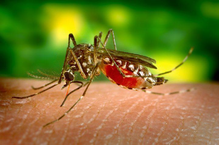 蚊媒介感染症は「刺されないための対策」が重要