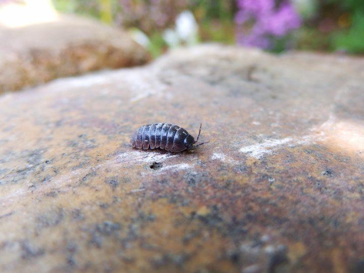 ダンゴムシが発生する原因とは?ダンゴムシの習性を知って対策しよう!