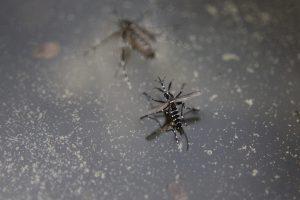 【屋内/屋外】やっかいな蚊を駆除する方法