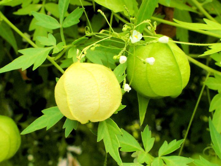 グリーンカーテンでお気に入りの植物を育てよう