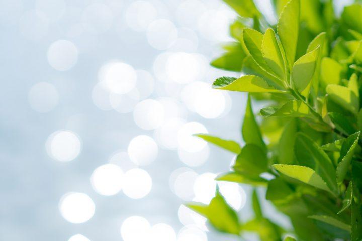 エコ活動につながるグリーンカーテン
