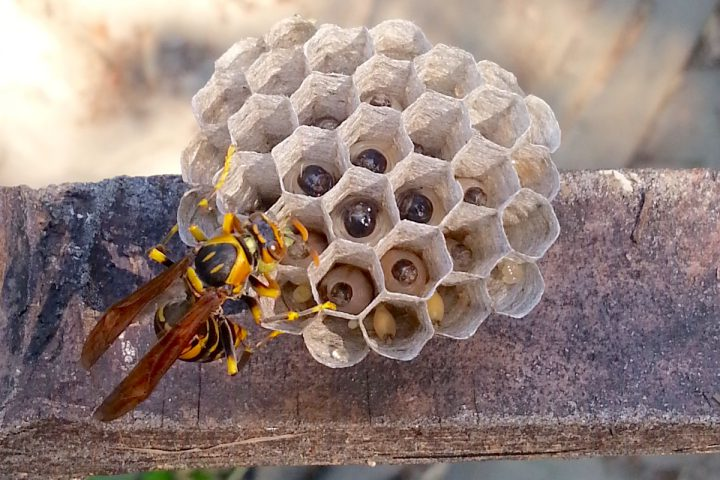 夏から秋にかけて凶暴化するハチ対策!