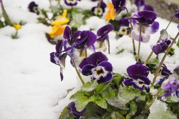 花の冬越し~花だんと寄せ植え