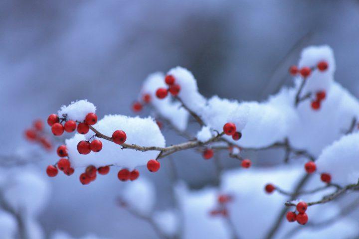 樹木の冬越し~地植えと鉢植え
