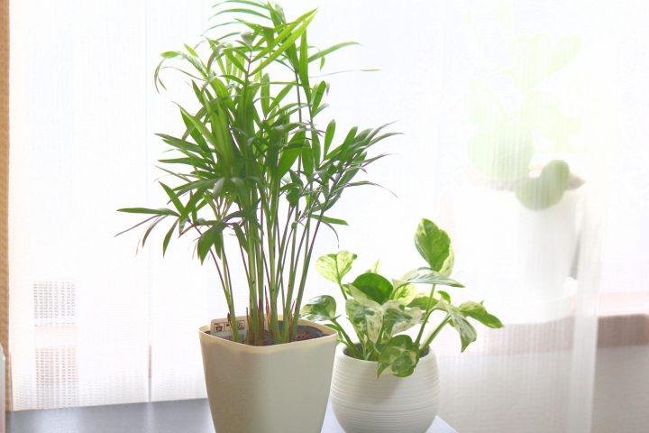 観葉植物・多肉植物の冬越し~鉢植え