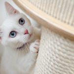 猫の習性・行動とその理由を紹介!かわいい行動から謎の行動まで解説