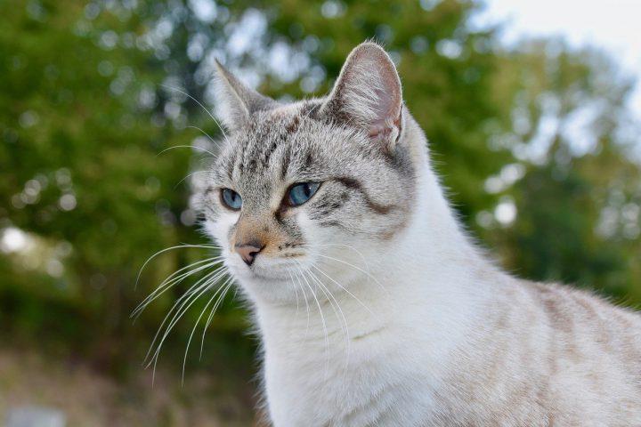 猫が侵入する理由