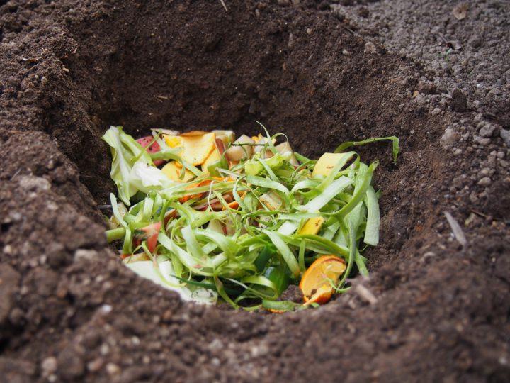 野菜 くず 肥料