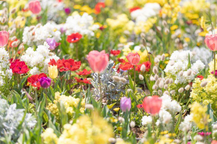 春に咲く花10選 ~たくさんの花々に囲まれて思いっきり春を感じよう~