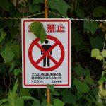 特定外来生物とは?しっかりと覚えておくべき危険な昆虫