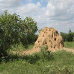 【アリの巣を駆除したい】アリの巣のメカニズムや被害について解説