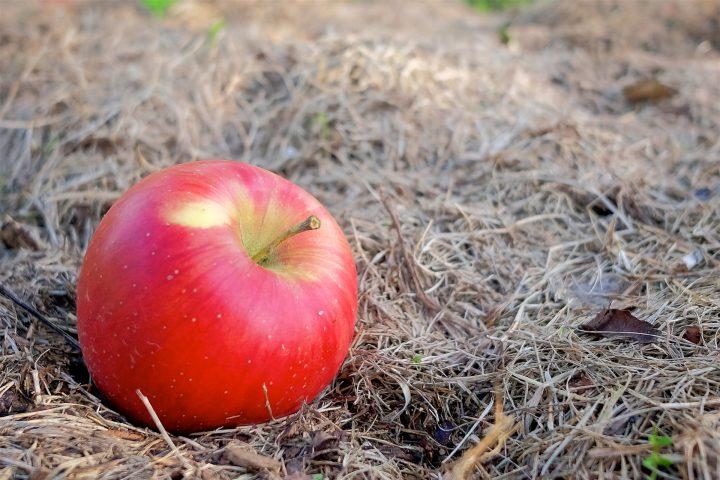 農業害虫としての被害