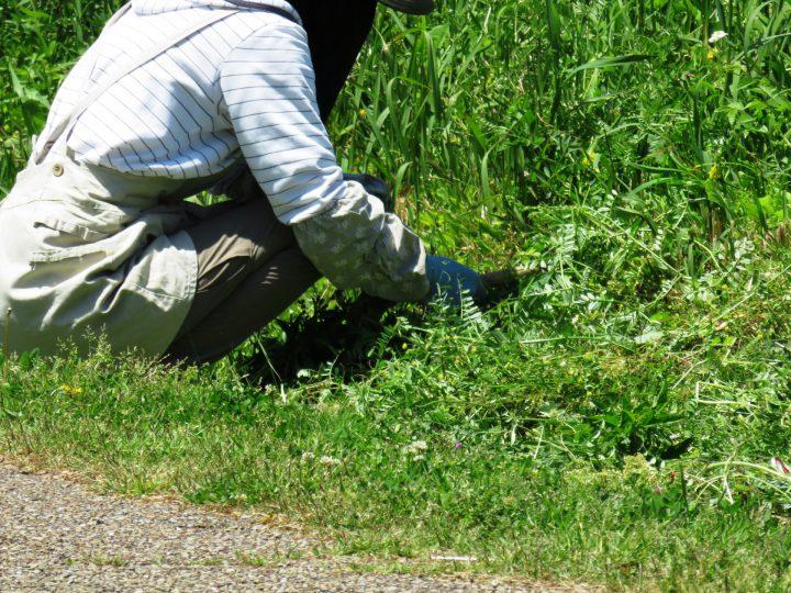 ツマアカスズメバチの対策