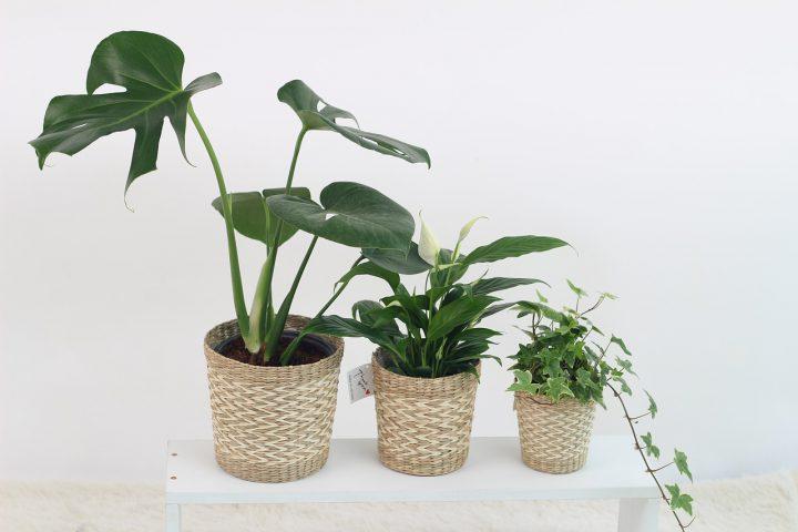 留守がちの家におすすめの植物