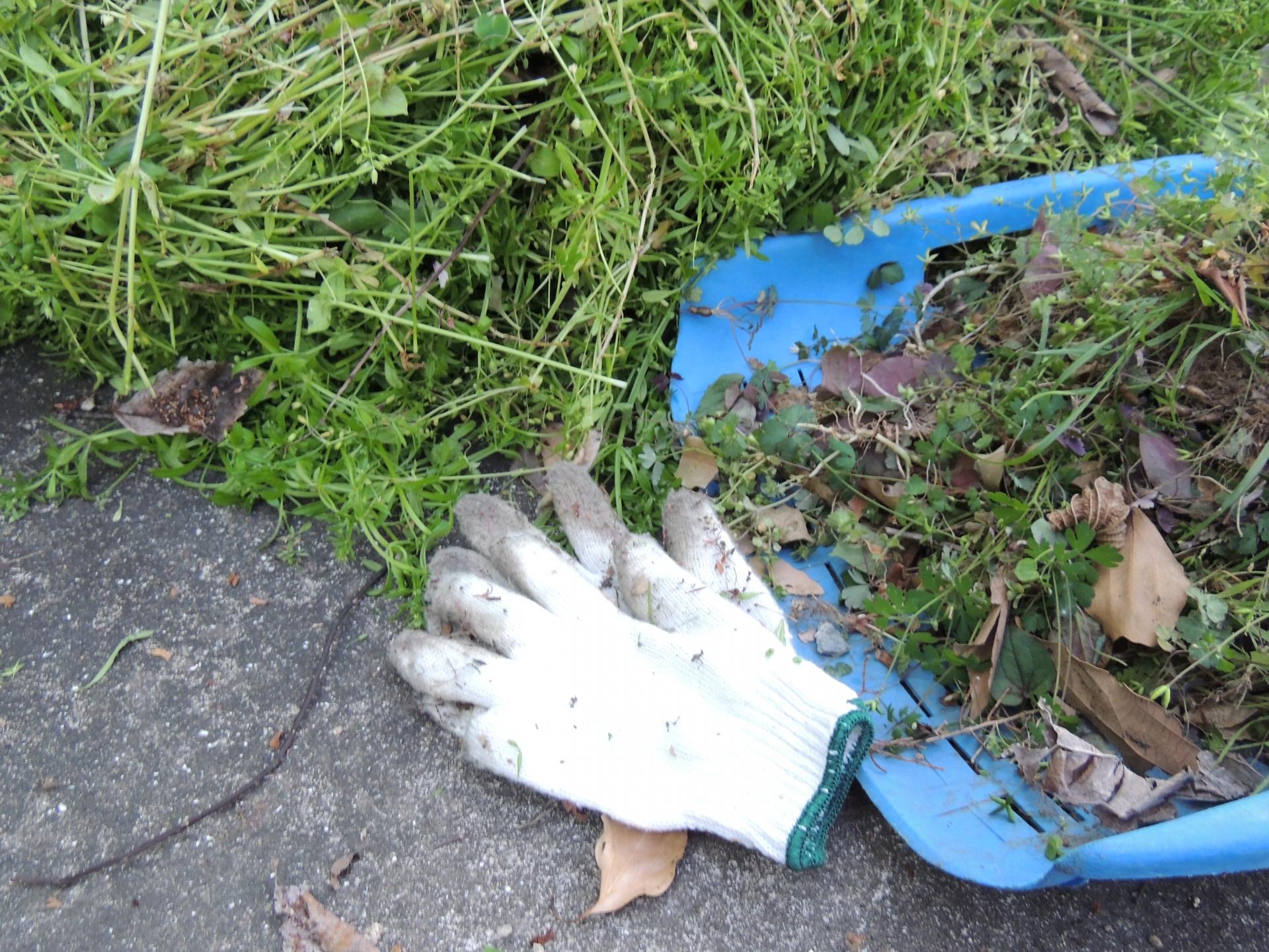 除草剤の使い方と注意点