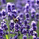 アブとハチの違いは?それぞれの特徴や見分け方、注意すべきこと