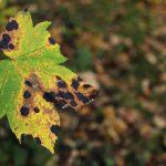 植物に発生するさまざまな病気。予防法と対処法とは?