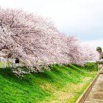 2020年 桜の開花予想