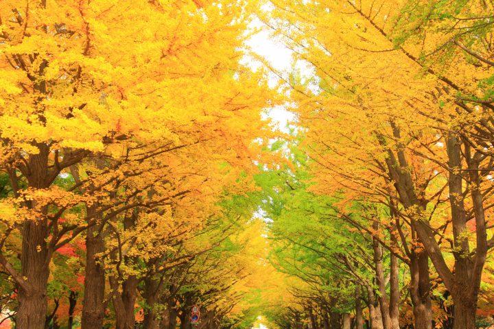 入学式・新学期のはじまりは春?それとも秋?
