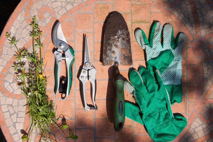 ミントの栽培で準備するもの