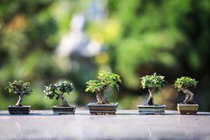 【初心者でも挑戦できる!】盆栽の育て方や手入れ方法を紹介