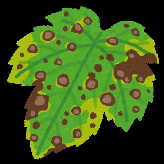 斑点が特徴の褐斑病