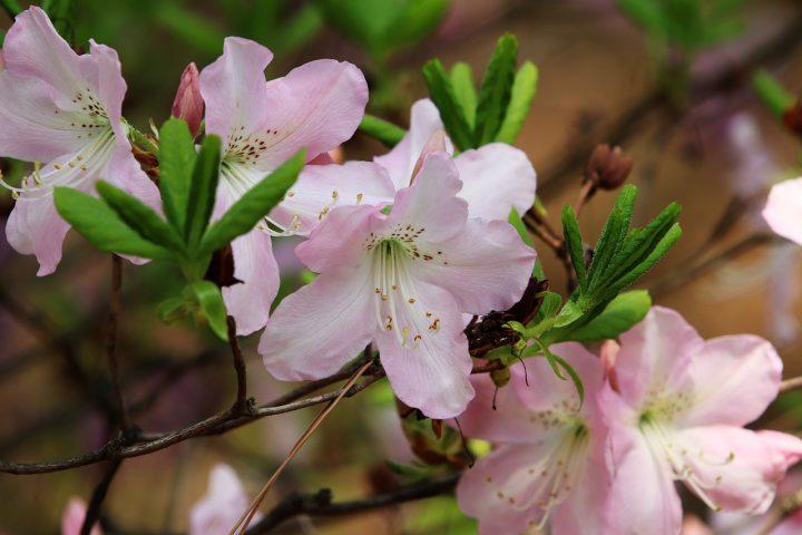 褐斑病にかかりやすい植物
