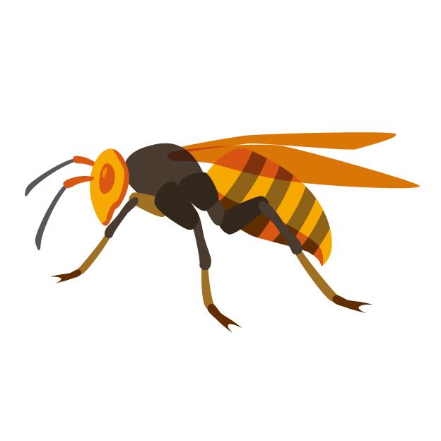 スズメバチにはたくさんの種類がある