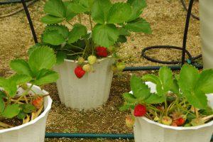 植物に寄生するハダニとは?ハダニの予防と駆除について解説