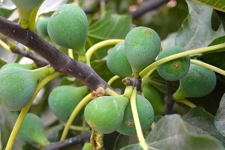 園芸におすすめの果樹を育てよう