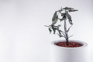 観葉植物が枯れる原因とは?正しい対処方法を知り長く楽しもう!