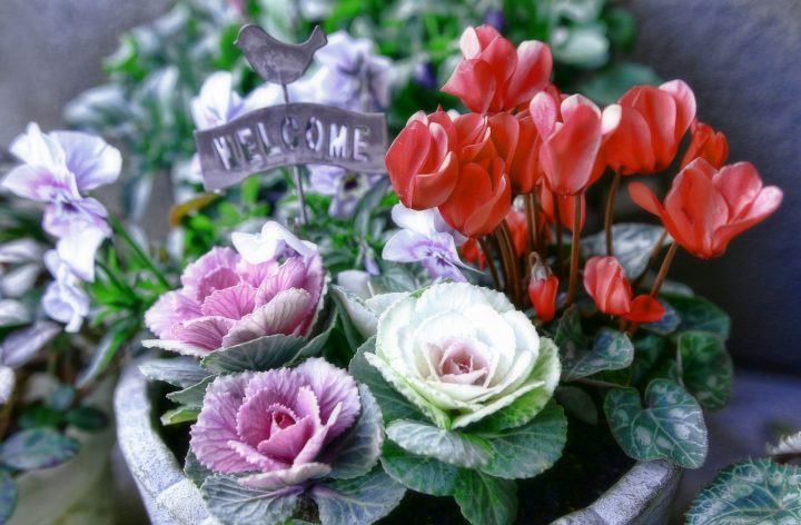 """<h4>寒さに負けない!</h4> <p>冬の寄せ植えにおすすめの植物12選"""" /></p> <p>冬は春に比べて花の種類が減りますが、寒さに強い品種を選べば華やかな寄せ植えを楽しむことができます。</p> <p>今回は、冬の寄せ植えの楽しみ方と管理のポイント、寒さに強く育てやすい12の植物をご紹介いたします。寒さに負けない植物を厳選して、冬もおしゃれな寄せ植えを楽しみましょう。</p> <h2>冬の寄せ植えの楽しみ方と管理</h2> <p><img src="""