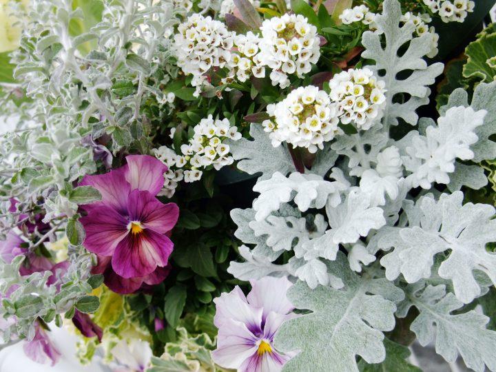寒さに強い植物で冬も寄せ植えを楽しもう