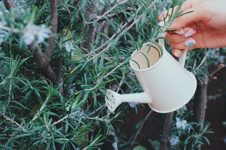 観葉植物が枯れる10の原因