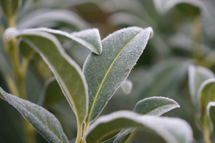 ⑤ 冬の寒さ・霜