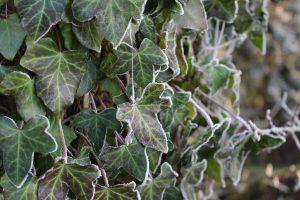 寒さに強い観葉植物を紹介。冬でも元気に育てるポイントをまとめて解説