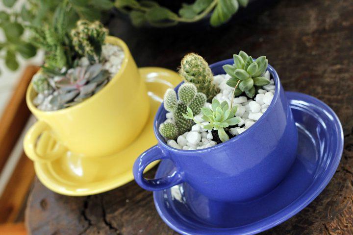 寄せ植えのコツ~植物の知識とデザイン