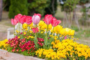 春の寄せ植えを楽しもう!おすすめの花や苗選びのポイントを解説