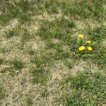 【雑草図鑑】雑草の種類と名前・見分け方を解説。おすすめ除草剤も紹介