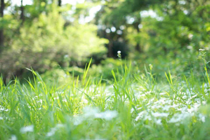 雑草は大きく分けて2種類