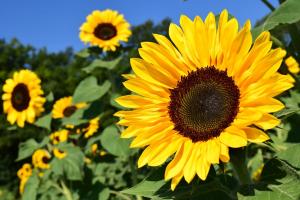黄色い花を咲かせよう!黄色い花の種類を春・夏・秋・冬の季節別に紹介