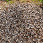ゴミムシが出る原因とは?ゴミムシの対策と駆除方法について