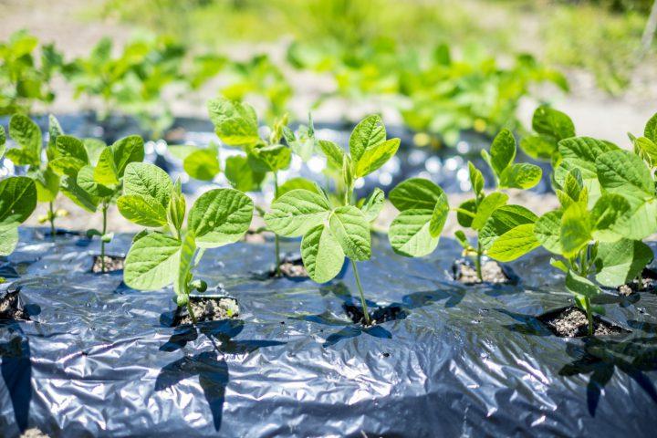 園芸におけるマルチングとは?効果や使用方法、注意点をわかりやすく解説