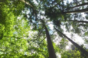 カミキリムシの生態や種類を解説。予防・駆除する方法は?