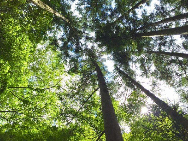 カミキリムシの生態や種類を解説。予防・駆除する方…
