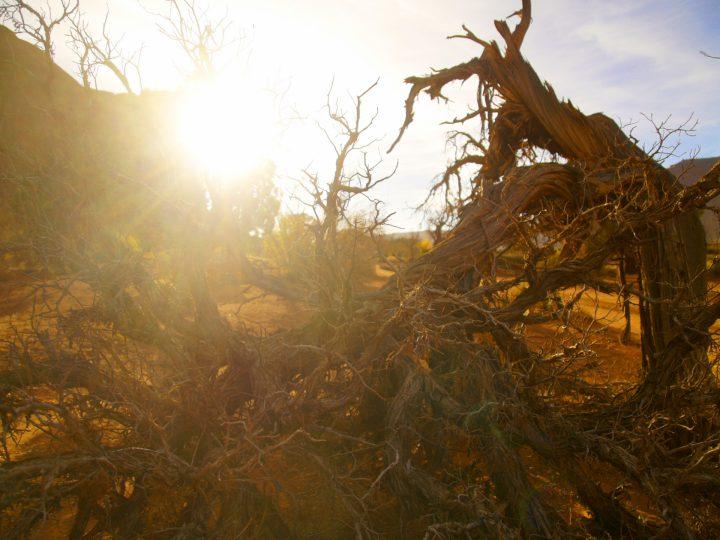 生物生態系の4つの危機