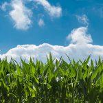 バイオスティミュラントとは?肥料や農薬との違い・今後の課題を解説