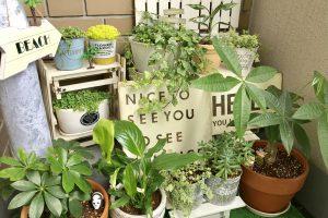 初心者必見!ベランダ園芸でおすすめの植物・準備するものを紹介