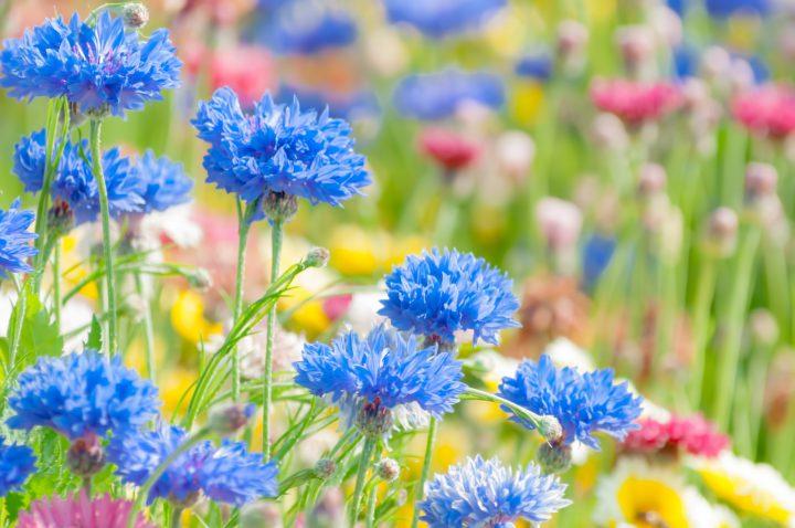 【花がきれいな公園・施設5選】各所のおすすめポイントを解説