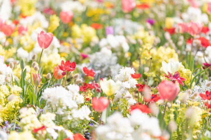 花がきれいな公園に出かけよう